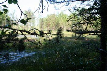 Naučná stezka Dářská rašeliniště zavede návštěvníky do míst, kam se dříve nedostali
