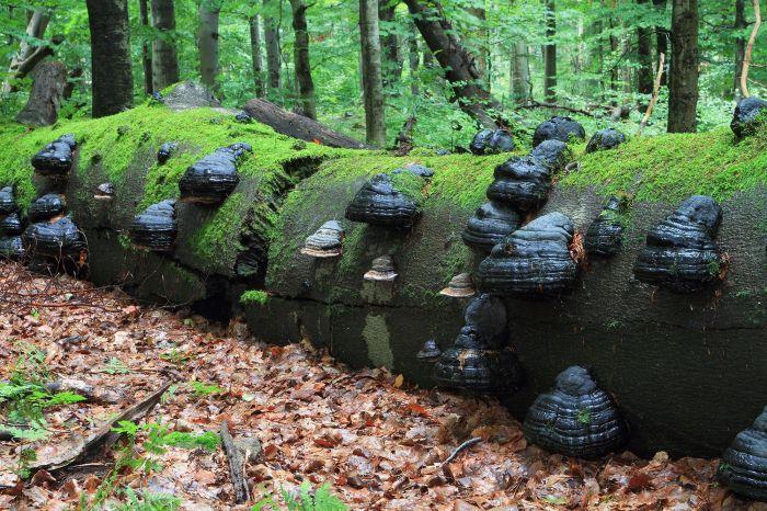 Národní přírodní rezervace Žákova hora - 2000 x 1333